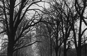 Highworth Photograph 0093